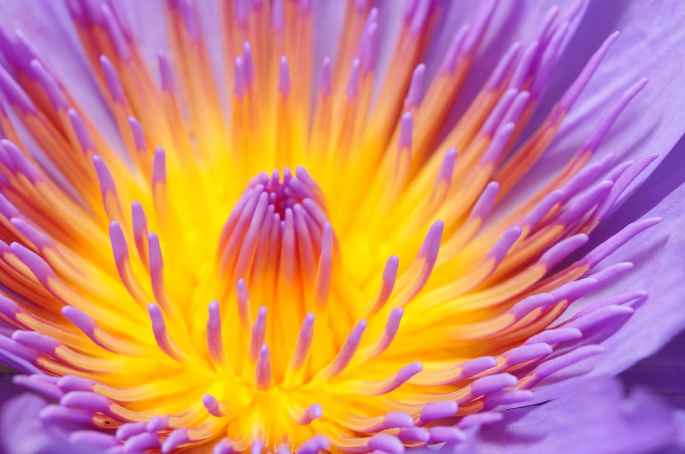 Flower928K